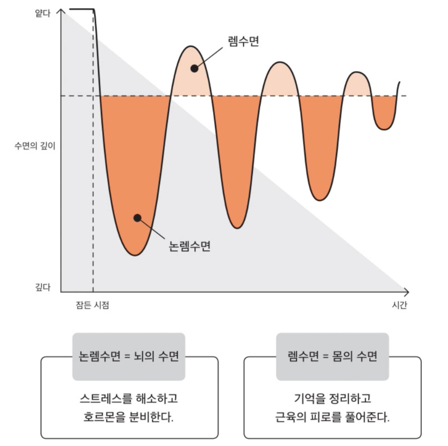 수면 싸이클